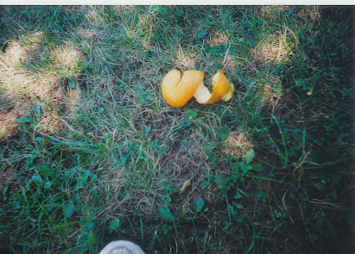 --Cub Scout Camp photo of an orange peeled in one piece!--